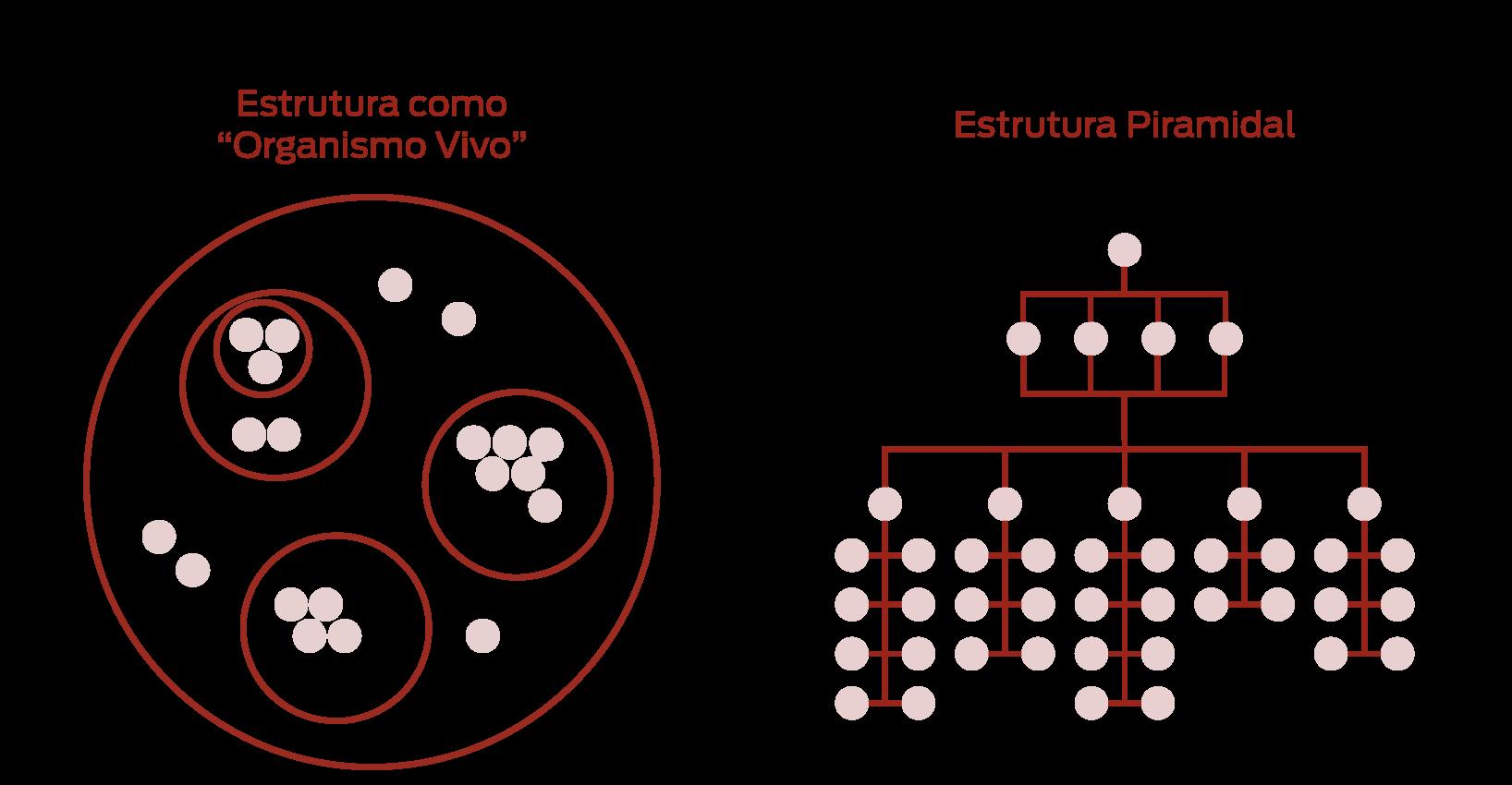 estrutura piramidal vs estrutura ágil organismo vivo